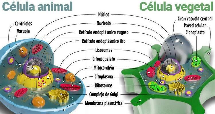 Organelas Celulares Educa Mais Brasil